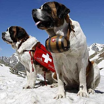 rsz_switzerland_saint_bernard_d_5798