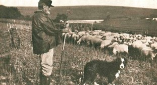 shepherd-with-his-flock-and-dog-on-the-south-downs-steyning-c1910