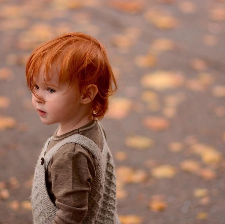3a63aa5943667dc5ce2dce4ce74b7c9c--ginger-boy-ginger-babies.jpg